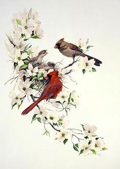 Linda Picken Gallery / Cardinals in Dogwood.jpg