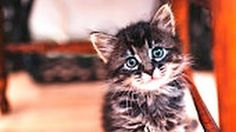 Video List Cute kittens and cats funny - Colecciones - Google+ Baby Cats and Kittens meowing playing video Compilation baby Cats Kittens doing funny things    More cute kittens HERE http://www.youtube.com/user/TheFederic777?sub_confirmation=1  #kittens #cats #CuteKittens