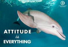 Attitude is everything! Dolphin Photos, Ocean Pictures, Ocean Pics, Dolphin Tale 2, Clearwater Marine Aquarium, Cute Fish, Wale, Marine Biology, Winter Pictures