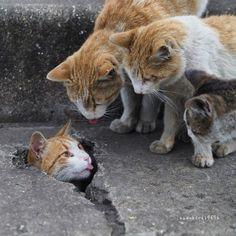 "Chefepaulino: ""My crazy and sweet passion for dogs and g .- chefepaulino: ""Mi loca y dulce pasión por los perros y los gatos"" – Cat Katze… Chefepaulino: ""My crazy and sweet passion for dogs and cats"" – Cat Katzen – - Baby Animals, Funny Animals, Cute Animals, Cute Kittens, Cats And Kittens, I Love Cats, Crazy Cats, Image Chat, Photo Chat"