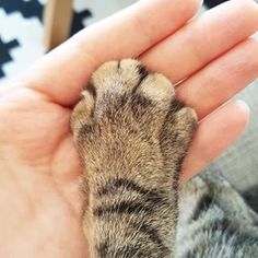 Trying to hold your cat's hand. | 21 Slightly Odd Things All Cat Owners Are Guilty Of