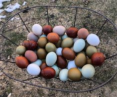 A Guide to Chicken Egg Colors - Why do chickens lay different colored eggs? Learn the simple reason for different colors in the egg basket. Fancy Chickens, Raising Backyard Chickens, Keeping Chickens, Pet Chickens, Backyard Farmer, Chicken Egg Colors, Blue Chicken Eggs, Hen Farm, Blue Eggs