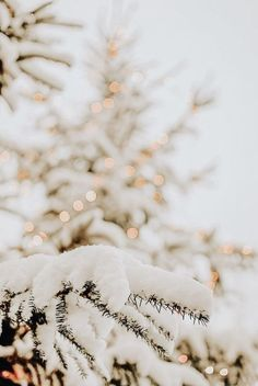 Wallpaper Natal, Christmas Phone Wallpaper, Christmas Aesthetic Wallpaper, Holiday Wallpaper, Aesthetic Iphone Wallpaper, Aesthetic Wallpapers, Christmas Lights Background, Christmas Lights Wallpaper, Samsung Wallpapers