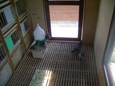 Pigeon Loft, Home Appliances, House Appliances, Appliances