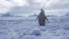 After years of international negotiations, Ross Sea in Antarctica will become the world's largest marine protected area.