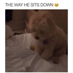 He sits like Winnie the Pooh Funny Animal Jokes, Funny Dog Memes, Funny Dog Videos, Humor Videos, Animal Memes, Cute Funny Dogs, Cute Funny Animals, Cute Animal Videos, Cute Animal Pictures