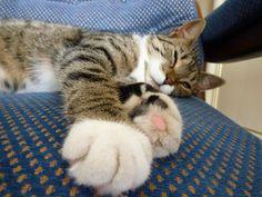 Lisbeth (aka Mimi) Cat | Pawshake Hamburg