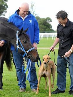 The world's fastest thoroughbred galloper, Black Caviar, meets her greyhound equivalent, Miata. As at the start of May 2012, Miata has won her past 13 races.