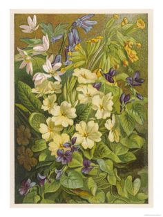 Flowers of March and April: Viola Giclee Print at Art.com
