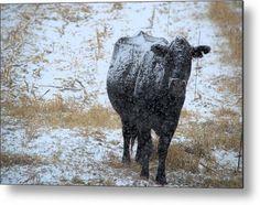 Snow Angus Metal Print by Bonfire #Photography
