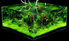 Insightful planted aquarium read the article Aquarium Terrarium, Nature Aquarium, Home Aquarium, Aquarium Design, Reef Aquarium, Aquarium Fish Tank, Planted Aquarium, Aquascaping, Aquarium Maintenance