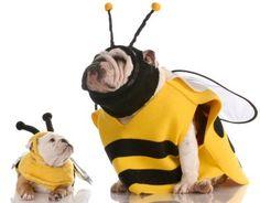 #Halloween #bulldog #Bee   -  #HEROIKX
