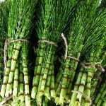 Horsetail herb is a powerful plant that prevents Alzheimer's and dementia by removing heavy metals from the body. Here is how to use horsetail herb. Herbs For Hair Growth, Quick Hair Growth, Herbal Remedies, Natural Remedies, Alzheimer's And Dementia, Wild Edibles, Natural Herbs, Natural Health, Au Natural