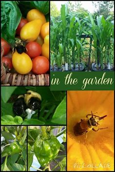 In the garden...July 5, 2015