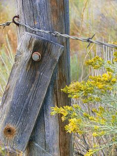 Old fence post with barbwire and yellow wild flowers growing around it from Montana, USA.Copyright by Jennie Marie Schell. Laundry Room Colors, Rustic Laundry Rooms, Country Fences, Rustic Fence, Old Fences, Photography Themes, Vintage Graphic Design, Rustic Gardens, Wild Flowers