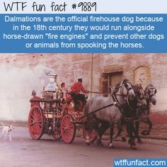 Wtf Fun Facts, Funny Facts, Random Facts, Awesome Facts, Awesome Stuff, Fun Facts About Animals, Animal Facts, Celebrity Blogs, Famous Historical Figures