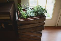 Crated Succulents Want to spruce up your potted plants? Use old wooden crates to contain your sweet indoor garden. Check out Violet's crated succulents! Diy Pallet Projects, Garden Projects, Fruit And Veg Shop, Old Wooden Crates, Little Gardens, Outdoor Plants, Potted Plants, Plant Pots, Organic Gardening