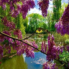Um bom passeio pra você que está em Paris é ir até a cidade de Giverny para visitar os jardins de Monet, são apenas 74km de distância e a visita é inesquecível! #giverny #França