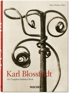 """KARL BLOSSFELDT Karl Blossfeldt was a German photographer, sculptor, teacher and artist who worked in Berlin. We love his close-up photographs of plants and living things and we would love to own his famous book """"Urformen der Kunst"""". Karl Blossfeldt, Natural Form Art, Inspiration Artistique, Fotografia Macro, Gelatin Silver Print, Hans Christian, Organic Form, Paperclay, Art Plastique"""