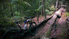 Parklands #mtb by Jodie Willett @jodiewillett #offroad #cycling #mountainbike #ride #bike #nature