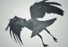 Sightings of the Black Bird of Chernobyl began just months before the Chernobyl disaster took place in 1986. The creature shares many of the same characteristics as Mothman: humanoid, winged, covered in dark hair, and glowing red eyes. Sightings of the Black Bird began in the days leading to the incident.