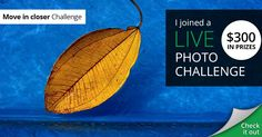 I joined The Move in Closer live photo challenge by sharing my photos. Wish me luck! Digital Art Photography, Macro Photography, White Photography, Photography Poses, Cool Photos, My Photos, Stained Glass Quilt, Canon 6d, Sell My Art