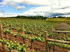 Willamette Valley Wine Country  #willamettevalley #pinotnoir #winecountry