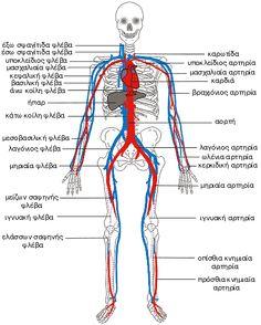 Κυκλοφορικό σύστημα My Job, Medical, Fitness, Nursing, Roses, Google, Medical Doctor, Pink, Rose