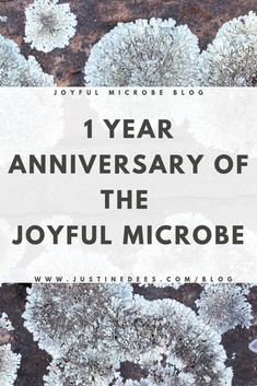 The Joyful Microbe blog is 1 year old!!! To celebrate, I'm sharing some things I've learned along the way and which blog posts were most loved by readers. #science #biology #microbes #microbiology #blog #blogoversary
