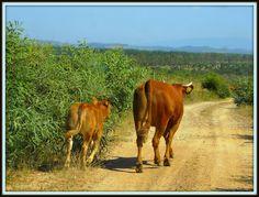 Costa Alentejana, Portugal Costa, Portugal, Animals, Viajes, Animales, Animaux, Animal, Animais