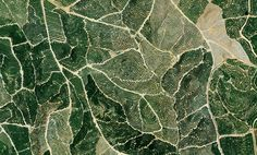 Citrus trees cover the landscape in Isla Cristina, Spain. The climate there is ideal for this growth with an average temperature of 64 degrees and a relative humidity between and Check out. Aerial Photography, Nature Photography, Trees To Plant, Plant Leaves, Map Quilt, Black White Pattern, White Patterns, Citrus Trees, High Art