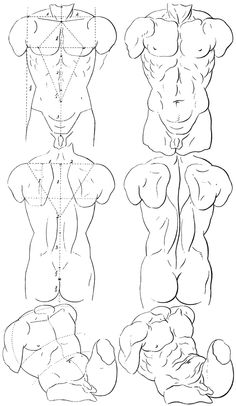 Body Reference Drawing, Guy Drawing, Drawing Poses, Drawing People, Art Reference, Anatomy Sketches, Art Sketches, Art Drawings, Human Anatomy Drawing