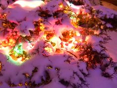 Magical #puremichigan snow