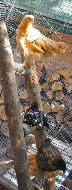 Tips for Preventing Chicken Boredom In The Winter     I'm aware that there are many resources,...