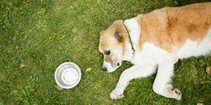 Een volledig gezonde hond stierf aan een zonnesteek in Altrincham, in Engeland, en de Dierenbeschermingorganisatie RSPCA geeft nu een waarschuwing aan alle hondenbezitters.