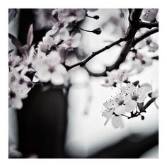 """Waiting for you... #spring #cherryblossom #blossom #pictureofspring"""