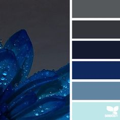 SnapWidget | today's captivating photo for { dew blue } is from @marinajades ... most everyone knows i have a major *thing* for blue, so this photo was heaven to dive in and create a palette for ... thanks so much for the #SeedsColor photo share, Suzie ... it was such a blast creating a palette for your inspiring photo!