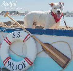 Fundraiser for Oakland Dog Parks May 16th at Estuary Park from 10AM to 4PM. More info on Facebook: https://www.facebook.com/events/835189846560599/ Buy tickets for your dog's photo shoot: http://SoulfulPetPhotography.BrownBookIt.com/Schedules/OaklandDogs