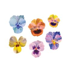 Did you know Pansies were the official flower of the Free Thinkers Society? Wear these Helen Dealtry Tattly on your face to join the club. Watercolor And Ink, Watercolor Flowers, Watercolor Tattoo, Watercolor Paintings, Watercolors, Pansy Tattoo, Flower Tattoos, Fake Tattoos, Trendy Tattoos