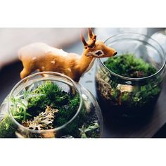 Moos in the jar- little forest you can have in your house! And our friend- Jeremi the deer.