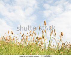 Pastures of heaven - stock photo