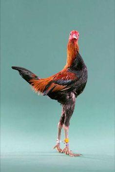 Leggy bird