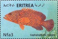 Coral Hind (Cephalopholis miniatus)