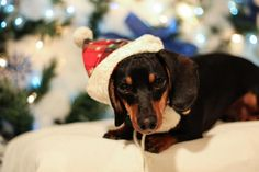Clicker Company Pet of the month contest Naughty or Nice...  Vote for Rucker at https://www.facebook.com/THEClickerCompany/app_423981594282440