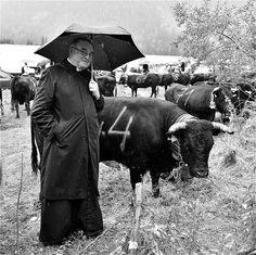 photo en format au carré  n&b des hommes & des vaches d'hérens / un autre regard sur le combat des reines 2014 de chamonix