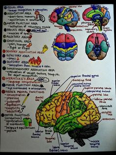 Ever wonder what parts of the brain control what functions?
