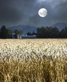 Harvest Moon by Mary Wethey