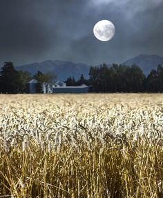 feeds my soul    #moon #goddess #art #luna