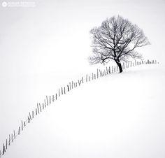 Winter prisoner by Adrian Petrisor [Il colore della neve]