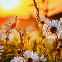 """""""É justo amar o belo e desejá - lo🌹; mas Deus deseja que primeiro amemos e busquemos a beleza do alto, que é imperecível🙏🏼.   Nenhum adorno externo se compara em valor ou amabilidade com """"um espírito manso e quieto"""", o """"linho fino, branco e puro""""🕊 (Apocalipse 19:14), que todos os santos da Terra usarão.   Essa veste os fará belos e amados aqui, e será depois sua senha para admissão ao palácio do Rei. Sua promessa é: """"Comigo andarão de branco; porquanto são dignas disso""""🦋.  Bom dia 🌾"""